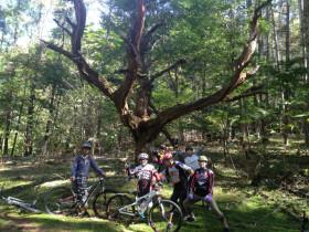 自転車IMG_6392